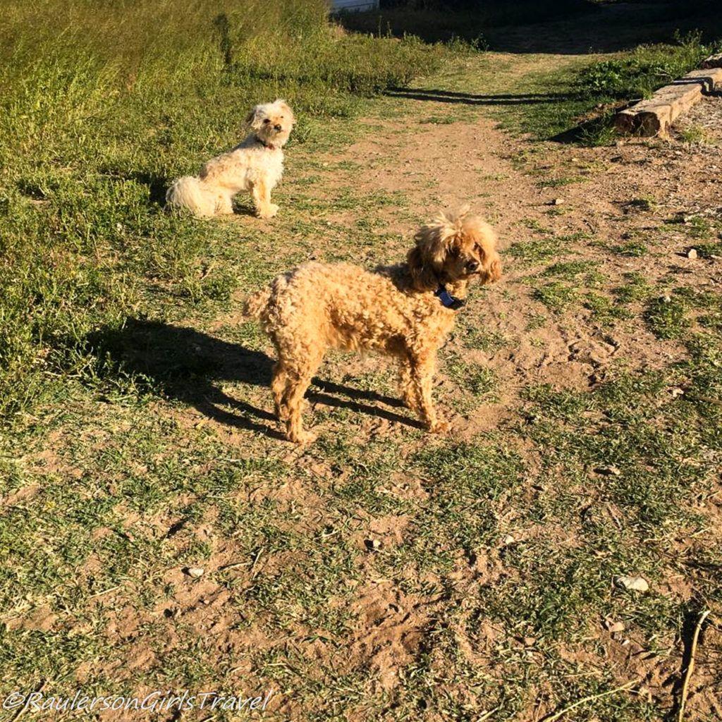 Buddy and Gidget on the Horse Farm