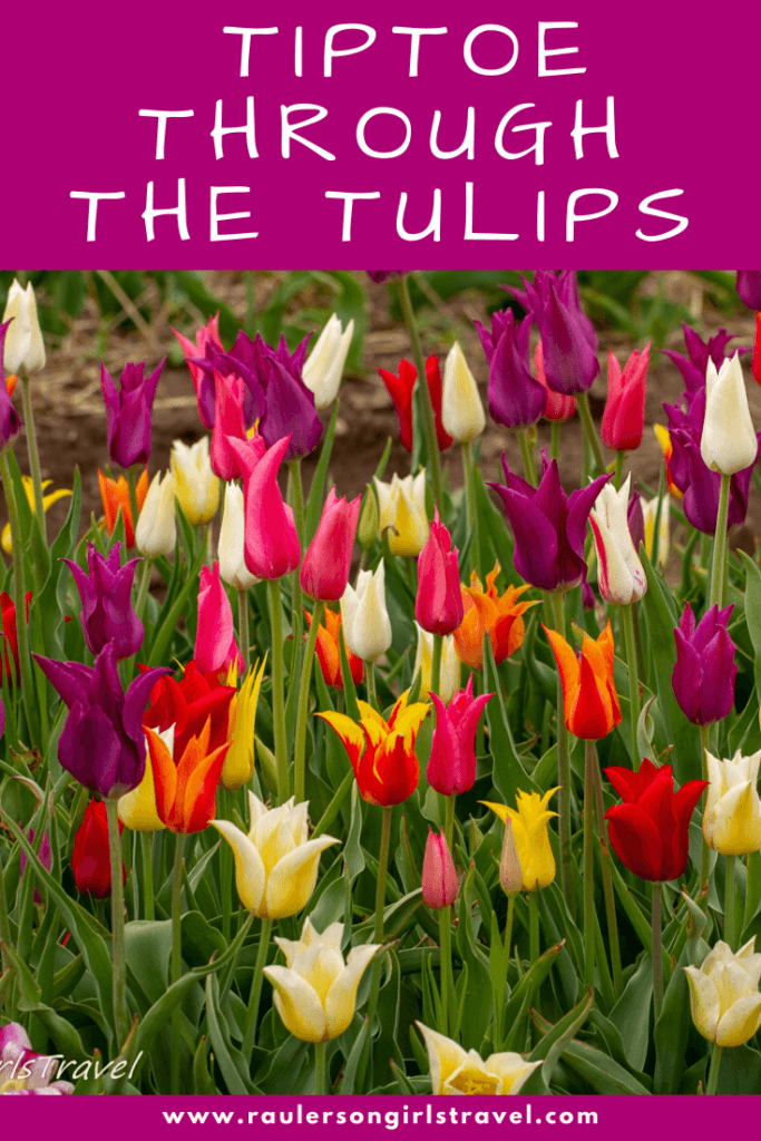 Tiptoe through the Tulips Pinterest Pin