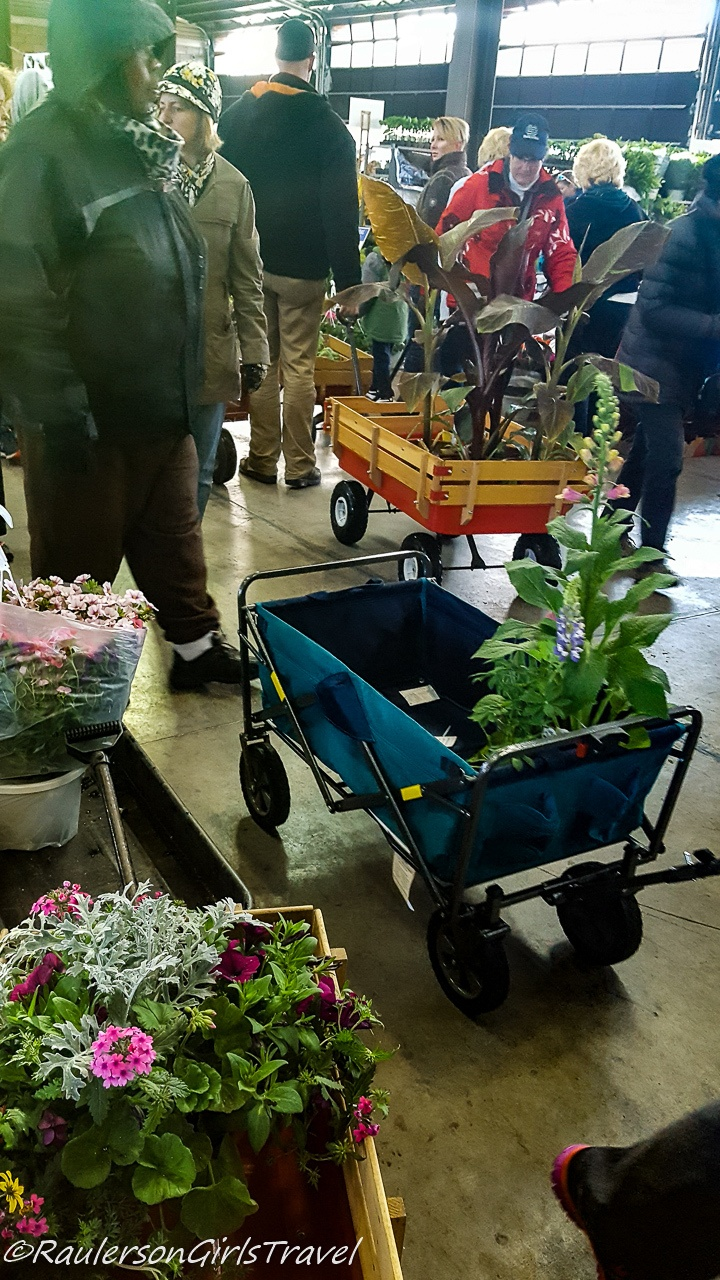 Wagons filled with plants on Eastern Market Flower Day