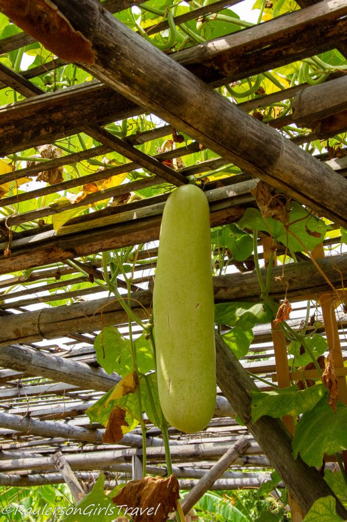 Hanging vegetable from bamboo