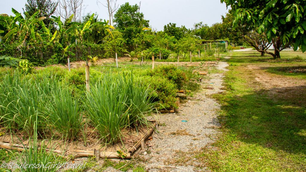 Growing vegetables on an organic farm in Thailand