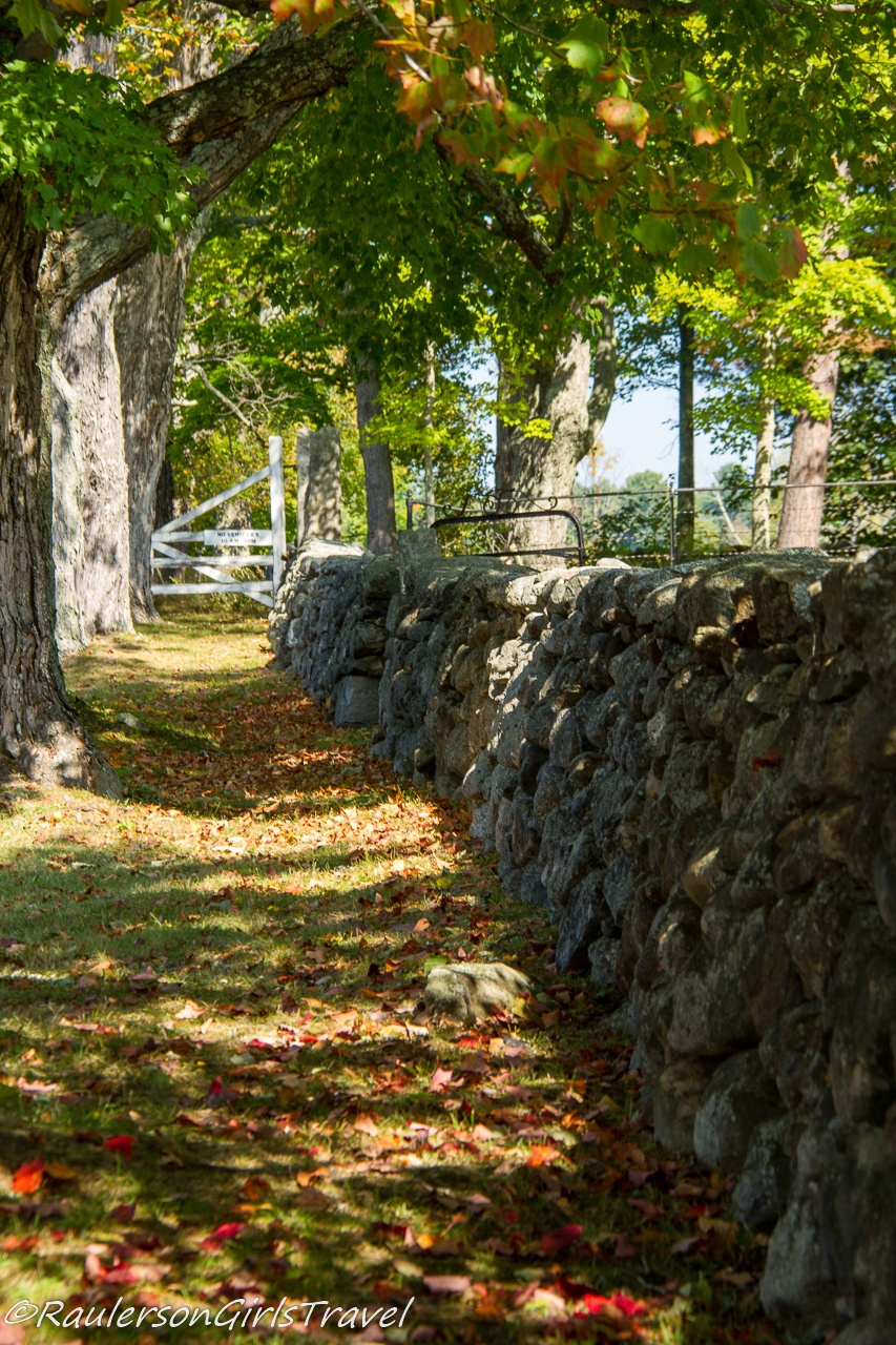 Woodland Path by a stone wall