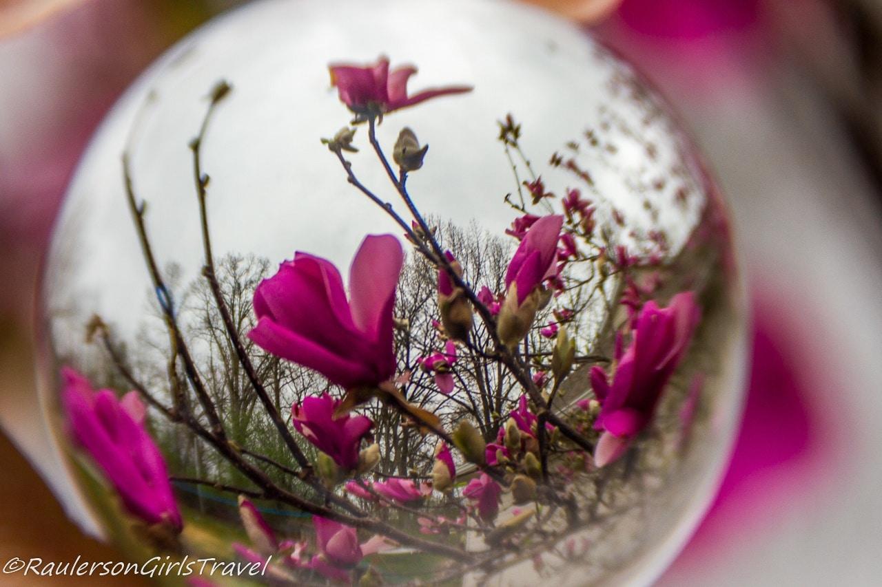 Pink flowers captured through a lens ball