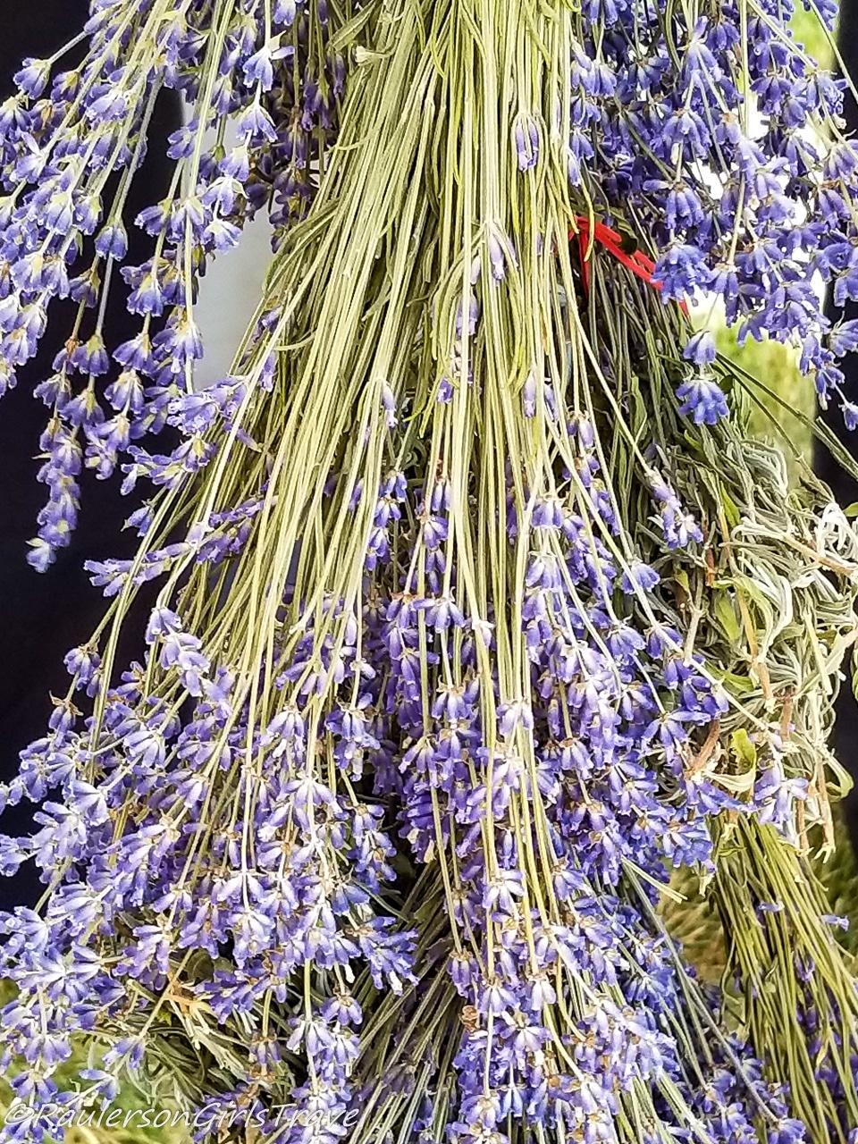 Drying Lavender bundles