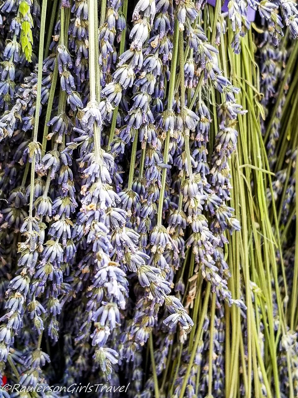 Close-up of Lavender bundles