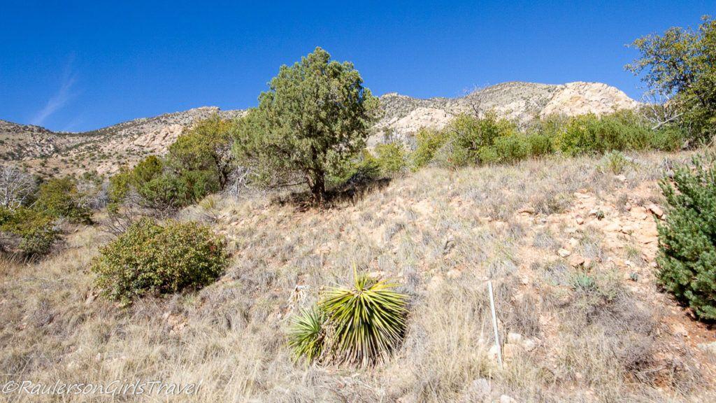 The vegetation growing on the Huachuca Mountains at Coronado National Memorial