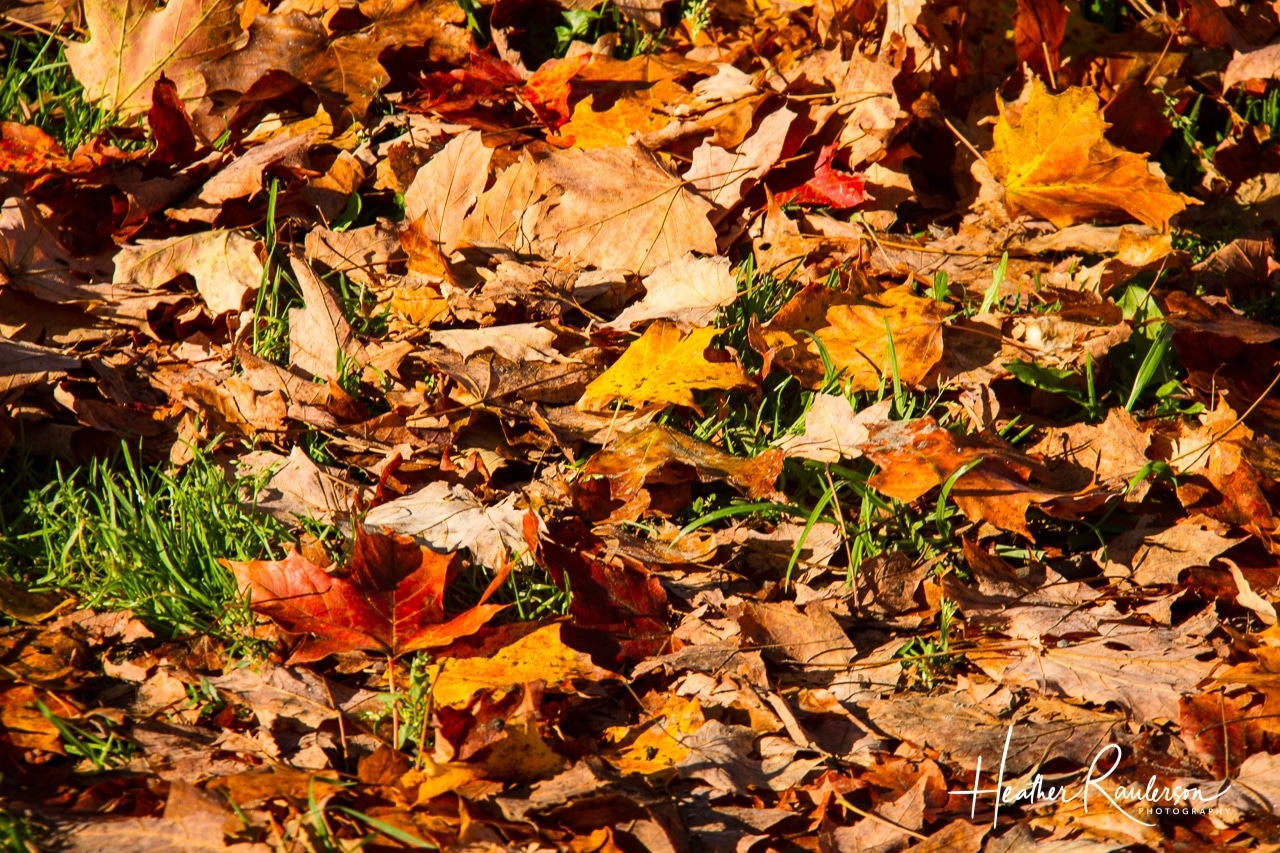 Fallen leaves on the grass in Autumn