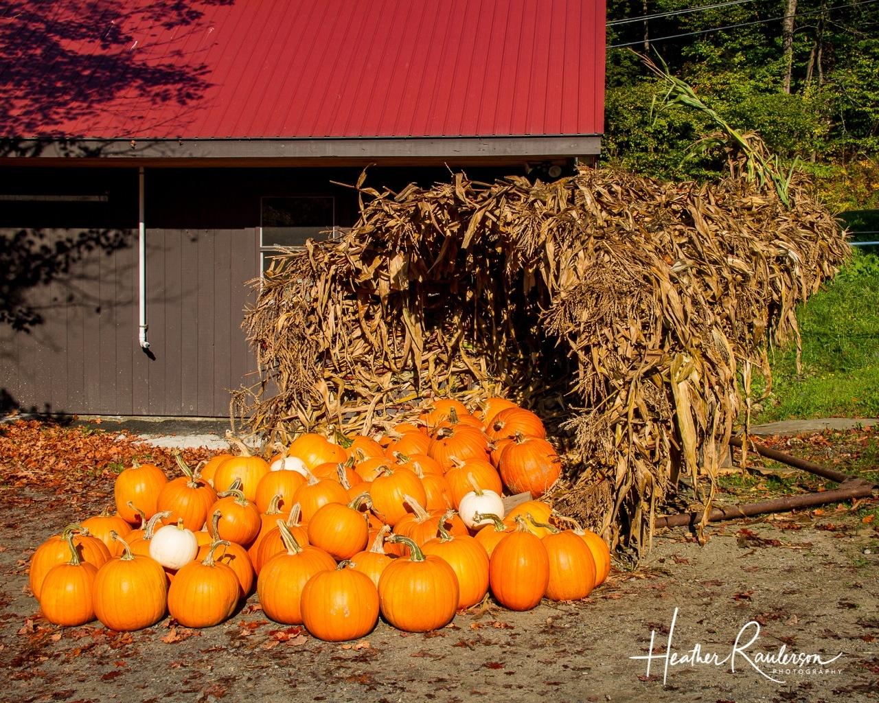 A cornucopia of pumpkins