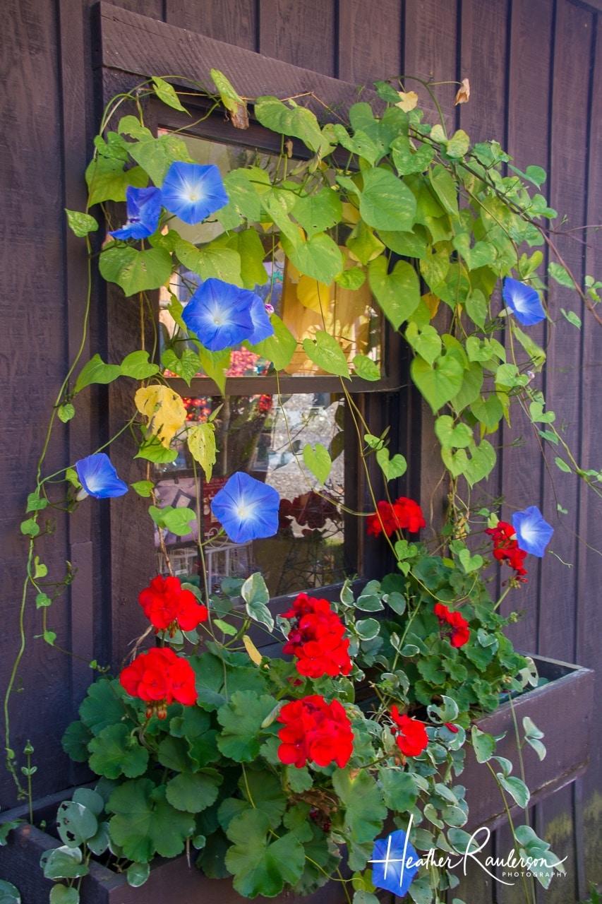 Flower Window Box Display