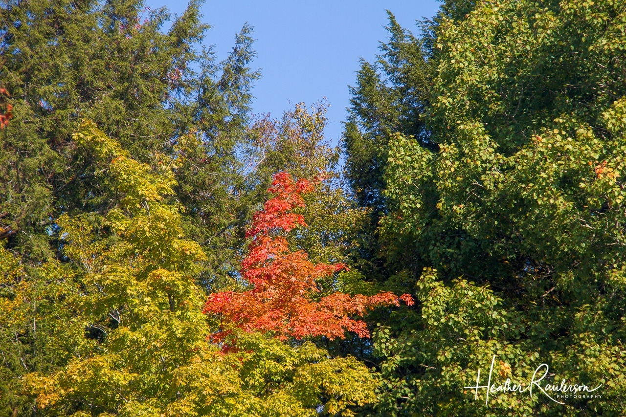 Orange fall color in Vermont