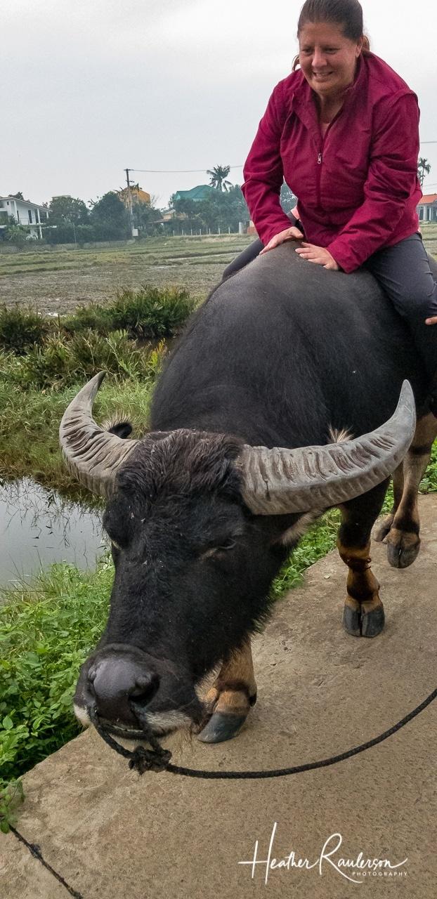 Heather Riding a Water Buffalo in Hoi An, Vietnam