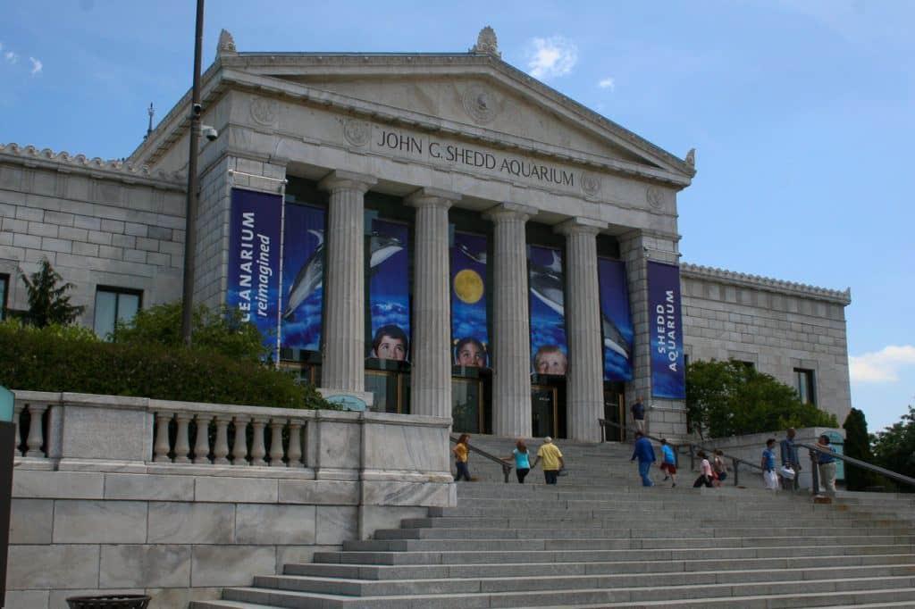 Chicago Shedd Aquarium