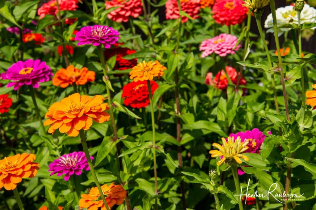 Colorful Gardens at the Shelburne Museum