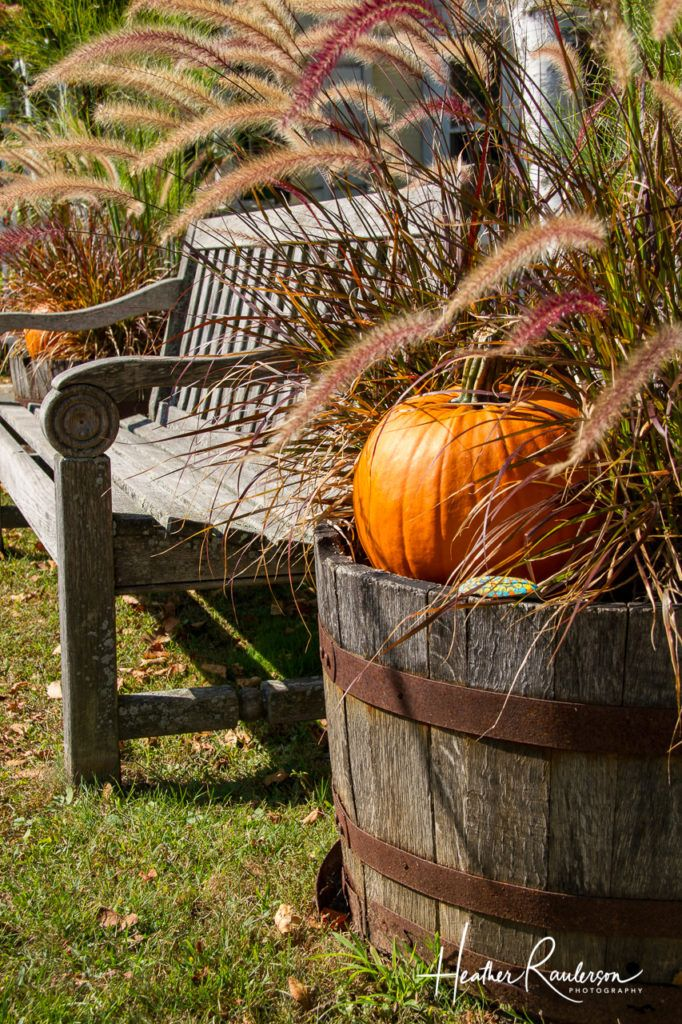 Bench surrounded by pumpkin fall display in Woodstock, Vermont