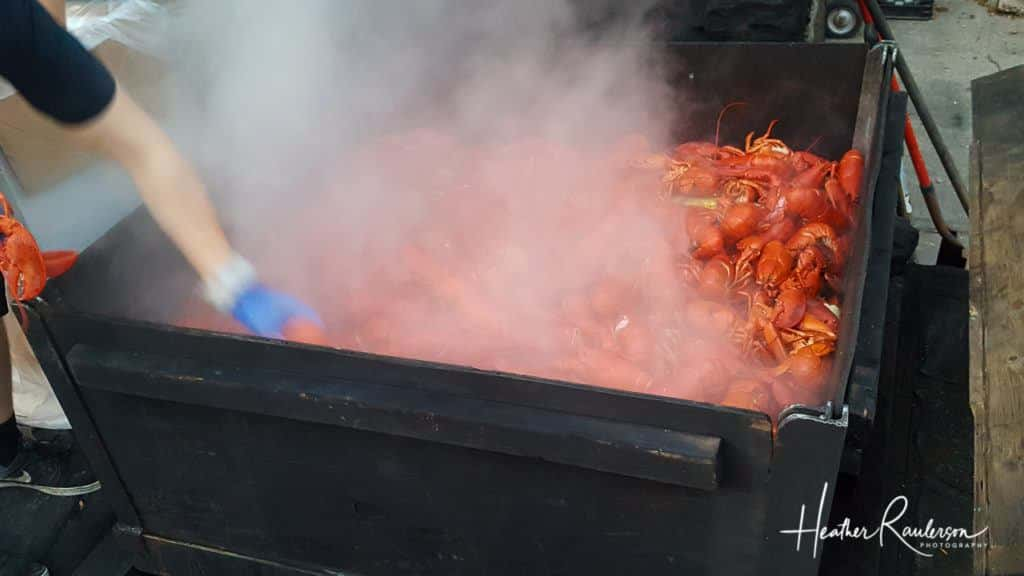 Steaming Lobsters at Fosters Clambake