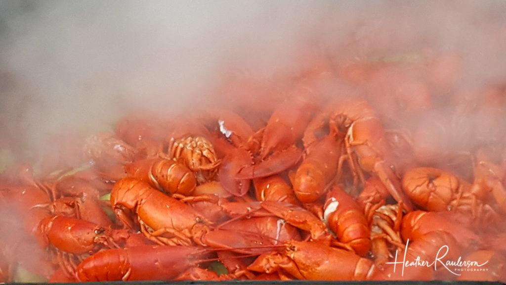 Maine Lobster being steamed
