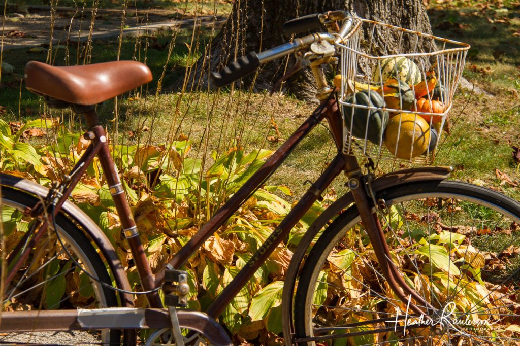 Old Bicycle in the Fall