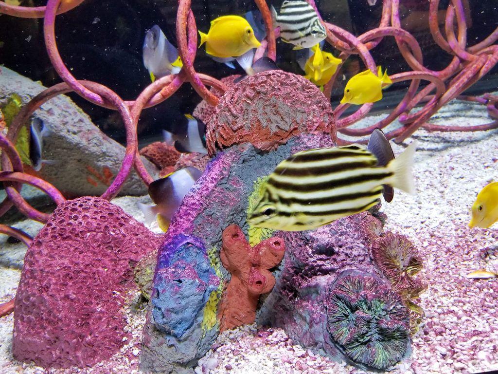 Colorful Fish at the Ripley's Aquarium