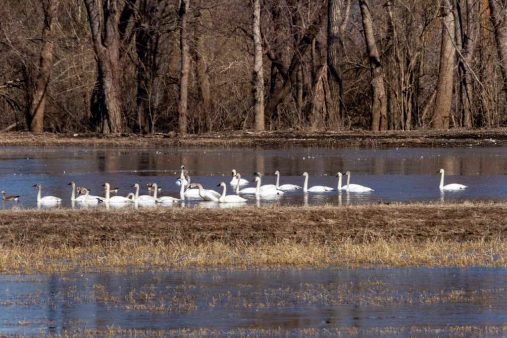 Swan Lake at Two Rivers National Wildlife Refuge