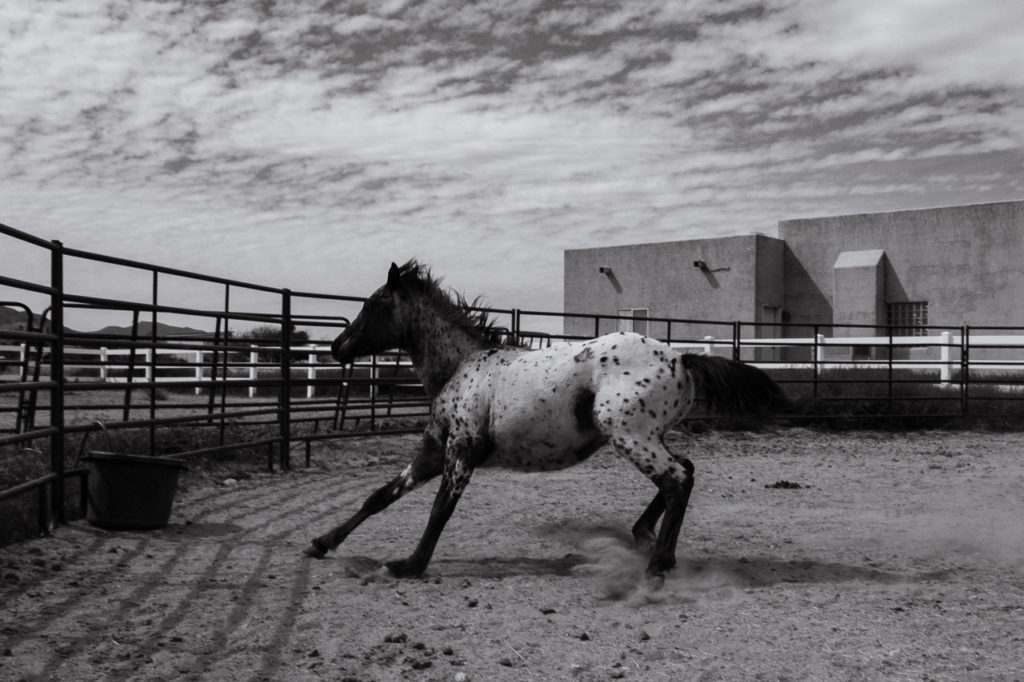 Fred letting off some steam in the round pen