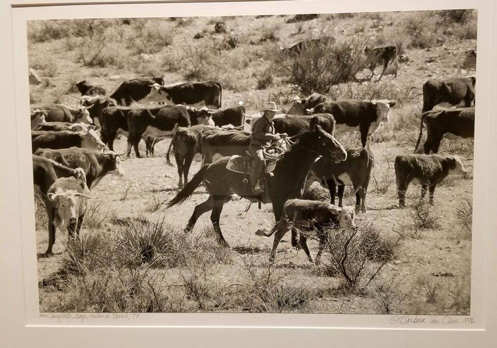 Ann Holland Daughtery, Gage Holland Ranch, TX- Cutting Cattle, 1996