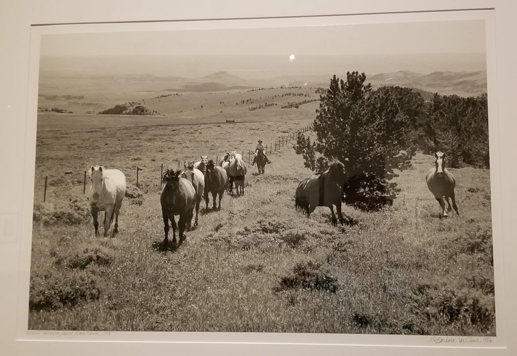 Michele Carroccia, Sweet Grass Ranch, MT - Moving Horses to the Bar B, 1995